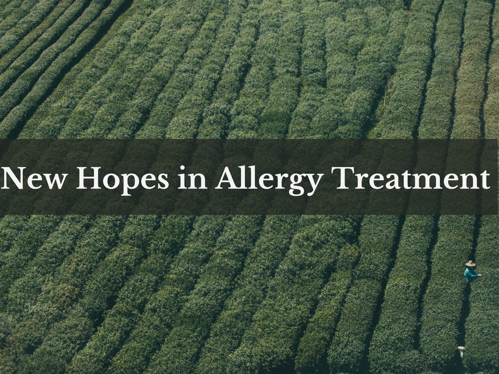 new hopes in allergy treatment